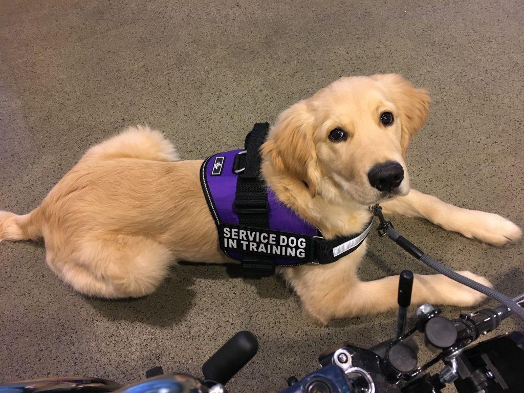 Kelly Considine Gunner Service Dog CRPS RSDSA